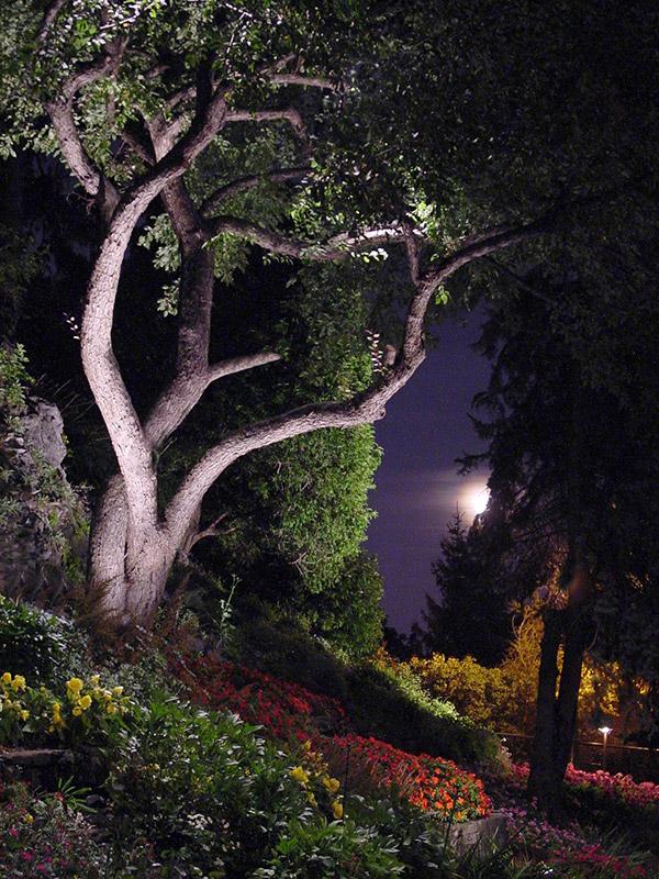Eclairage arbre good guirlande lumineuse extrieur ides for Arbre exterieur jardin