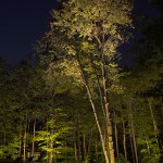 Réalisation d'éclairage d'arbres naturels