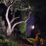 Réalisation d'éclairage de jardin et arbres